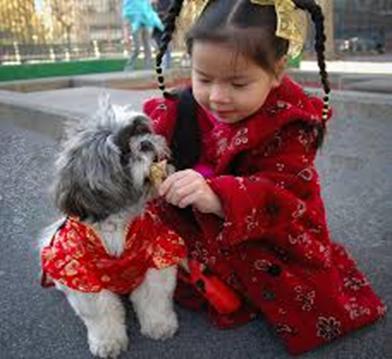 MÁSCOTAS EN CHINA: DE LA MESA AL SOFÁ